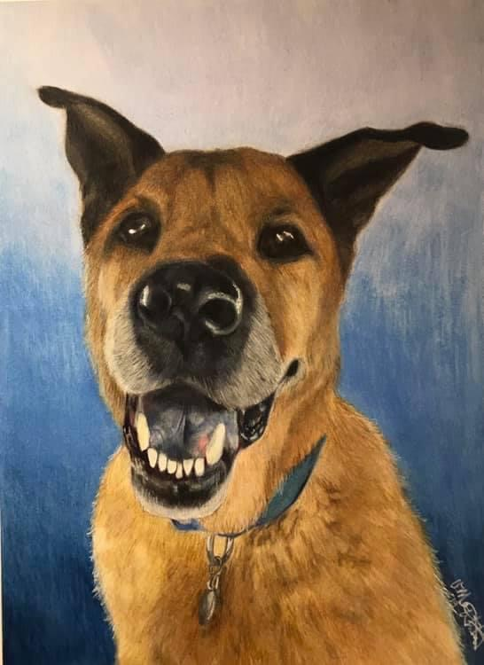colored pencil art drawing of tan dog with black ears and nose looking forward on blue background