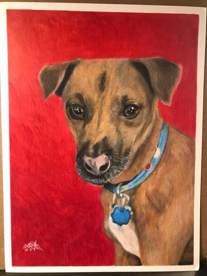 colored pencil art drawing of dark tan dog with blue collar looking forward on red background