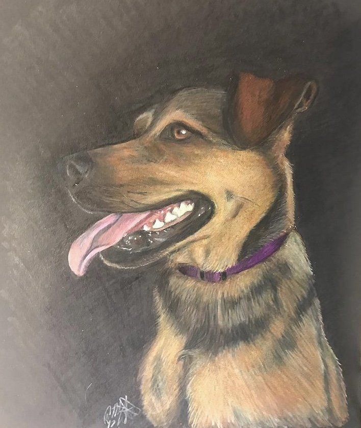 colored pencil art drawing of a tan and black dog in profile on black background