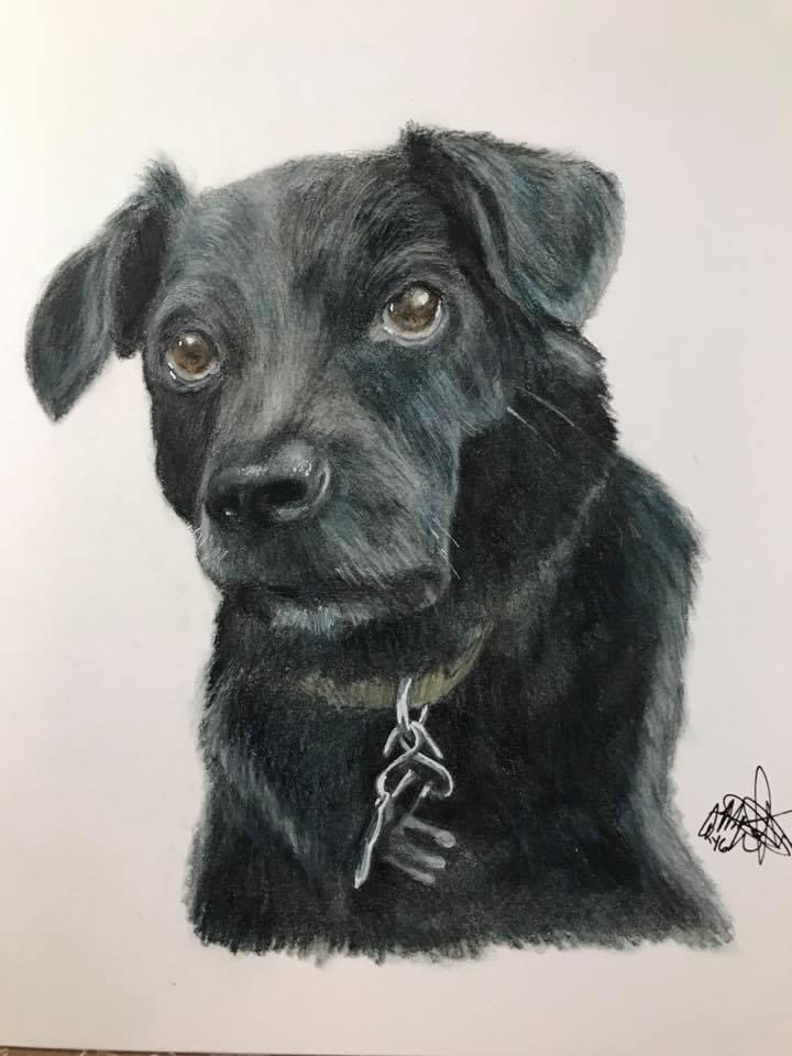colored pencil art drawing of black dog on a white background
