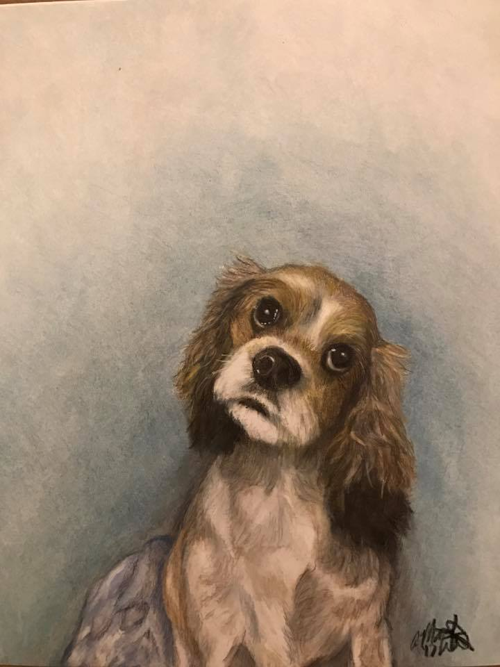 colored pencil drawing brown and white puppy on blue background